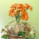 Stokrotka mała POMARAŃCZOWA - zestaw na 20 kwiatków