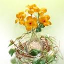 Stokrotka mała ŻÓŁTA - zestaw na 20 kwiatków
