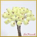 Dzika róża oszroniona cytrynowa podwójna gałązka 40 owoców