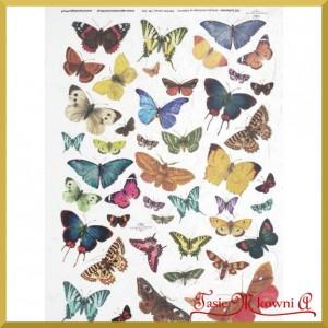 Papier ryżowy A4 R0230 - motylki