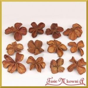Land lotus 4-6cm - kwiat suszony naturalny zestaw 12szt.