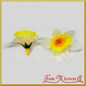 ŻONKIL - duże żółto-białe kwiatuszki 60szt.