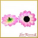 Kwiatuszki materiałowe SŁONECZNIKI  RÓŻOWO-BIAŁE 4CM