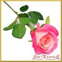 RÓŻA DŁUGA od 60 do 70cm żółto-różowa