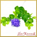 Kwiat borówki fiolet (A595) 26cm