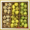 NATURALNE jajka nakrapiane 3 kolory (zielone żółte naturalne) pudełko 72szt.