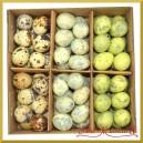 NATURALNE Jajka nakrapiane 3 kolory (niebieskie zielone naturalne) pudełko 72szt.