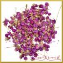 Susz KONICZYNA pąki ozdobne fioletowe 200g