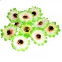 SŁONECZNIK- kwiatuszki ozdobne duże 10szt.