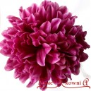 CHRYZANTEMA SATYNOWA purpurowa - duża główka 14cm