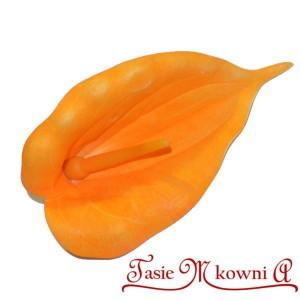 Kalla piankowa pomarańczowa - główka kwiatowa