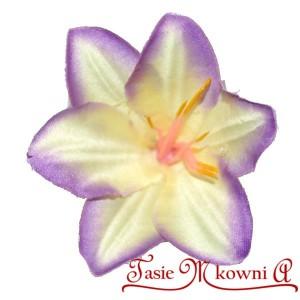 Lilia biało-fioletowa - główka kwiatowa