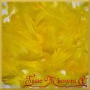Piórka krótkie żółte 10g