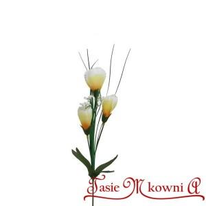 Krokus z trawa 3 kwiaty - żółto białe
