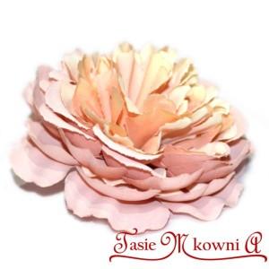 Hortensja PUDROWY RÓŻ - główka kwiatowa