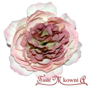 Hortensja PUDROWO BORDOWA - główka kwiatowa