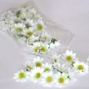 Kwiatuszki materiałowe stokrotki 3,5 cm - BIAŁO-ZIELONE
