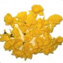 ŻONKIL - małe żółte kwiatuszki