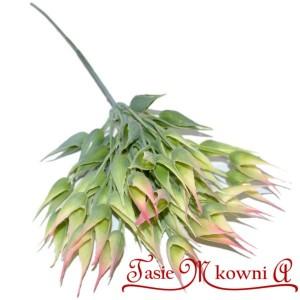 Gałązka zielona z różowym Łuski zboża 24 cm