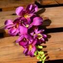 Kwiat frezji bez łodygi 19,5 cm, 6 kwiatów BURGUND