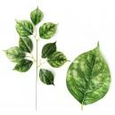 Liść LIPY zielony 55cm