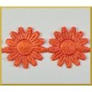 Słoneczniki rude